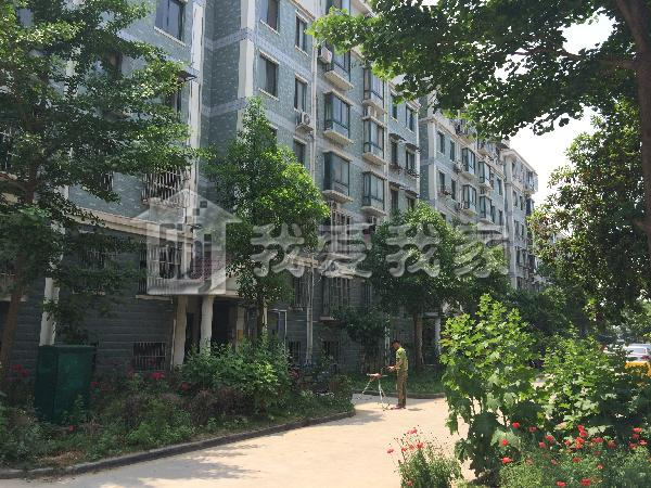 珍珠花苑图片