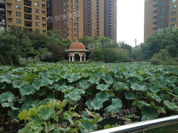 常州我爱我家九洲花园第4张图